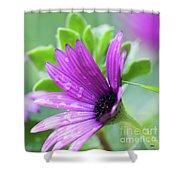 Purple Flower Closeup Shower Curtain