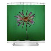 Purple Flower Green Background Shower Curtain