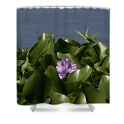 Purple Flower On Bayou Shower Curtain