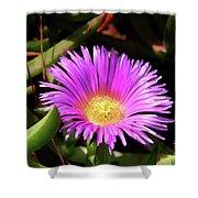 Purple Flower On California Coast Shower Curtain