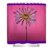 Purple Flower Pink Background Shower Curtain
