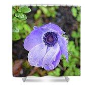 Purple Flowering Anemone Flower In A Lush Green Garden Shower Curtain