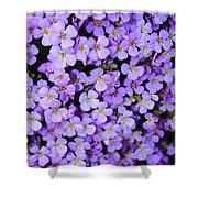 Purple Flowers - Rockcress Shower Curtain