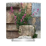 Purple Flowers In Ruins Shower Curtain