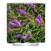 Purple Flowers Of Chiloe Shower Curtain