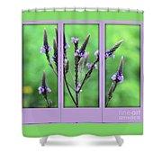 Purple Flowers Through A Window Shower Curtain