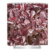 Purple Foliage Shower Curtain