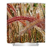 Purple Fountain Grass Abstract By H H Photography Of Florida Shower Curtain