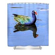 Purple Gallinule Shower Curtain