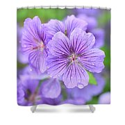 Purple Geranium Shower Curtain