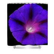 Purple Glory Shower Curtain