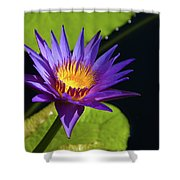 Purple Gold Shower Curtain