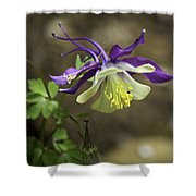 Purple Harlequin Columbine Shower Curtain