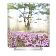 Purple Heal-all Shower Curtain