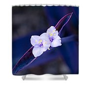 Purple Heart Flowers Shower Curtain