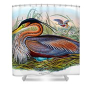 Purple Heron Antique Bird Print John Gould The Birds Of Great Britain Shower Curtain