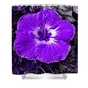 Purple Hibiscus Shower Curtain
