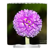 Purple Himalayan Primrose Shower Curtain