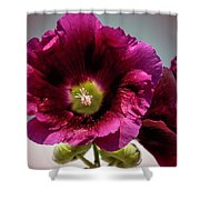 Purple Hollyhock Shower Curtain