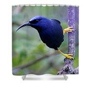 Purple Honeycreeper Shower Curtain