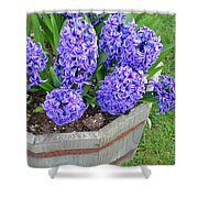 Purple Hyacinth Flowers Planter Shower Curtain