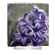 Purple Hyacinth  Shower Curtain
