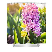 Purple Hyacinth Shower Curtain