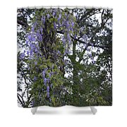 Purple In The Trees Shower Curtain