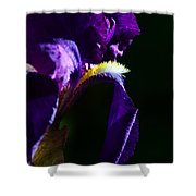 Purple Iris 2 Shower Curtain