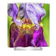 Purple Iris 2018 Shower Curtain