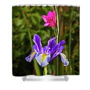 Purple Iris And Gladioli Byzantinus Shower Curtain