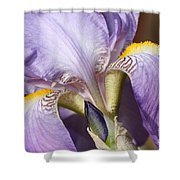 Purple Iris Beauty Shower Curtain