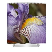 Purple Iris Closeup Shower Curtain