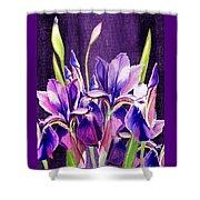 Purple Iris Dance  Shower Curtain