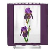 Purple Iris Duet Shower Curtain