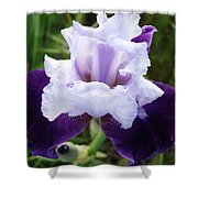 Purple Iris Flower Art Prints Garden Floral Baslee Troutman Shower Curtain