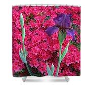 Purple Iris In Pink 2  Shower Curtain