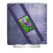 Purple Iris Passion Shower Curtain