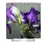 Purple Iris Water Drops Shower Curtain