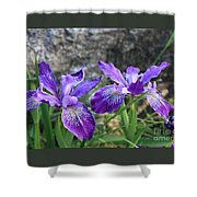 Purple Irises With Gray Rock Shower Curtain