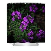 Purple Kiss Shower Curtain