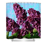 Purple Lilac 2 Shower Curtain