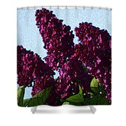 Purple Lilac 3 Shower Curtain