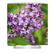 Purple Lilac Flowers Shower Curtain