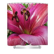 Purple Lilly In A Flower Bouquet Extreme Close-up Shower Curtain