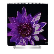Purple Lily Monet Shower Curtain