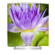 Purple Lotus Blossom Shower Curtain