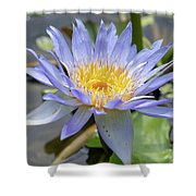 Purple Water Lily Flowers Blooming In Pond Shower Curtain