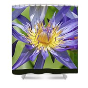 Tropical Purple Water Lily Shower Curtain