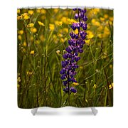 Purple Lupin And Buttercups Shower Curtain